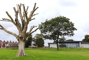 The much-loved 'Dead Elm' will be removed in the spring.