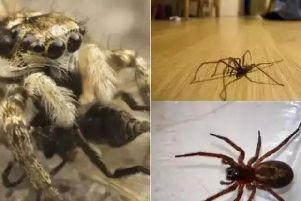 Some of the spiders found in UK homes