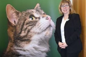 Maria Caulfield MP is Chairman of the All Party Group on Cats in Parliament