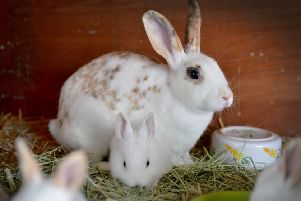 Bunnies are not just for Easter, warns Eastbourne rabbit rescuer