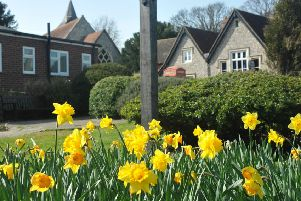 Spring flowers, daffodils, at Willingdon village March 29th 2012 E13213N ENGSUS00120120330110958