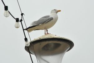 Seagull on a Eastbourne promenade lamp standard. July 4th 2013 E27222P ENGSUS00120130407130108