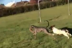 A still from the video which has been released by the RSPCA