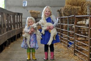 Lambing Weekend at the Royal Agricultural University's Harnhill Farm, Cirencester. Picture: Mikal Ludlow