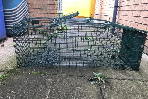 The cage in which the cat was locked.