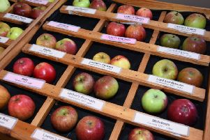 More than 100 varieties of apples will be on display at Wragby Apple Day. Photo by John Edwards EMN-180927-130820001