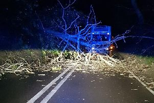 The fallen tree has closed the road. Picture: Hastings Police