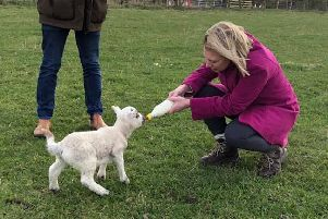 Gillian Martin MSP fed Buddy the lamb on her visit