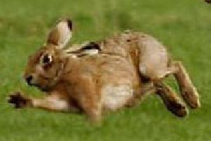 Dog owners taking part in hare coursing can be fined up to 5,000
