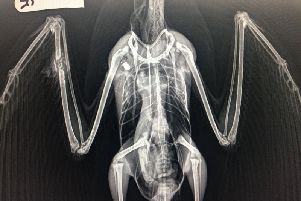 The gull was shot in its wing. Photo courtesy of the RSPCA. SUS-190627-104821001