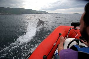 Local boatman captures dolphins at Kinbane Head near Ballycastle