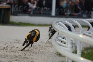 There will be no more racing at Drumbo Park Greyhound Stadium after the owners of the business took the decision to close it with immediate effect.