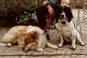 Sullington Tea Rooms, Stanley and Pepper have only just met yet already relaxed and at peace with each other