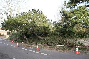 A tree in Carnegie Road, Worthing, has fallen down