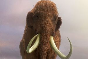 Could the remains of a mammoth lie beneath a proposed housing site in Louth?