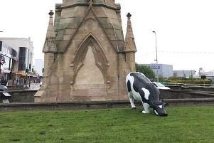 This cow turned up on the Clock Tower roundabout and had to be moo-ved. Photo: Barry Robinson. ANL-190513-070459001