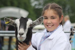 Champion young handler in the goat section at Lurgan Show was Lucy Wells from Portadown