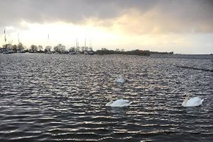 Swans on Lough Neagh
