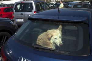 The PSNI in Craigavon has published advice on dealing with dogs locked in hot cars