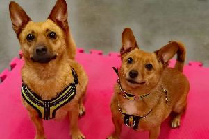 Pammi and Flossie - the Christmas rescue dogs still looking for homes