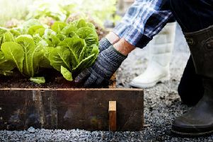 Many people now opt to grow their own fruit and veg, as opposed to buying them elsewhere, with endless opportunities in what can be grown in your own back garden or allotment