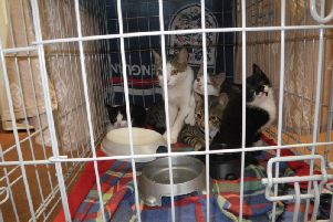 The cats were abandoned in a cardboard box