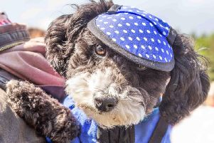 A stylish dog at Dog Fest 2018
