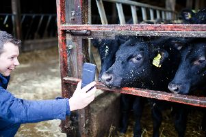 SellMyLivestock Tudder app for matching cattle, launched Valentine's Day 2019