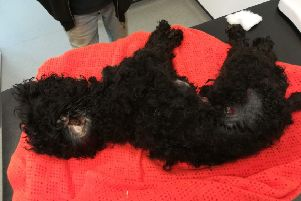 Ned was put to sleep on medical grounds after owner Vicki Ann Ball allowed him to get into a horrific state. Picture: RSPCA.