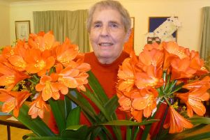 Pat Fussey with her magnificent Clivia miniata EMN-190328-075405001