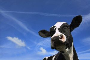 A cow - generic
