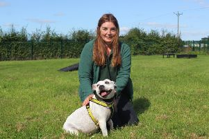 The Wymeswold-based Dogs Trust Loughborough is looking to rehome this 15-year-old Staffie called Lucy - the oldest Staffie staff have ever had to find a new home for. She is pictured here with canine carer Laura Parker EMN-190918-113136001