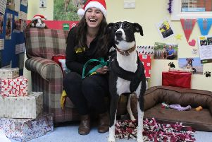 Ella is pictured with Lurcher Monty who is hoping he will have found his new forever home by the time the Christmas fair comes around PHOTO: Supplied