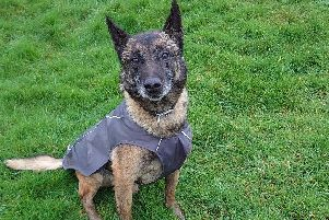 VROOM, a Melton military dog who has been shortlisted for a national award EMN-200213-181641001