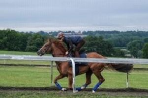 Stradivarius on the gallops at Newmarket