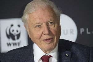 Sir David Attenborough. (Photo by Joel C Ryan/Invision/AP)