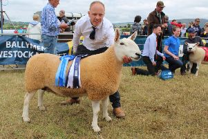Allister McNeill, from Toomebridge, with the North Country Cheviot Champion at Limavady Show 2018