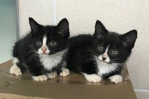 The four-week-old kittens were discovered by a dog walker. Picture: Cats Protection