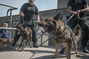 Nothing says I love you like police dogs