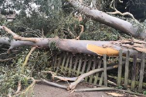 The huge tree could have killed someone