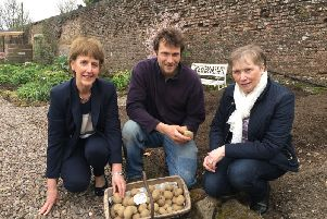 Dougal Dorman, Head Gardener at Colebrooke Kitchen Garden showing a range of seed potatoes to Margaret O'Malley, Vaughan Trust and Ann Orr, Show Manager, Fermanagh County Show.