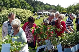 Popular plant fair back at Pottertons for third year