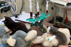 The kittens needed blood transfusions