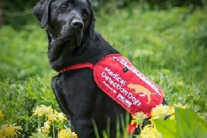 A Medical Detection Dog (Medical Detection Dogs)