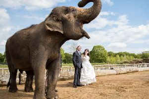Kirsty and Michael's wedding at Woburn Safari Park (Picture: Fiona Kelly Photography)