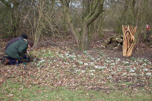 Plant a flower in memory of a loved one on the North Kesteven Snowdrop Walk. EMN-191102-140130001