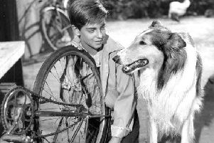 From 1956 Lassie episode. Lassie watches Jeff (played by Tommy Rettig) working at his bicycle