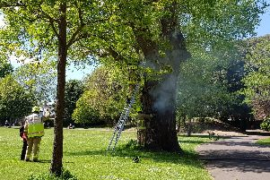The burning tree in Homefield Park