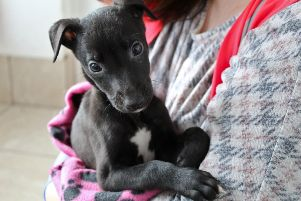 One of the pups at Dogs Trust Ballymena currently looking for a new home