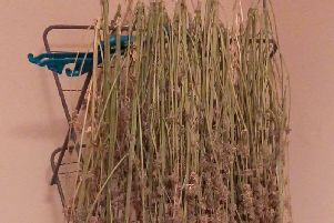 The herbal cannabis was found drying on a clothes horse.